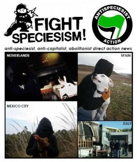fightsp